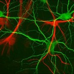How neural activity contains coded information
