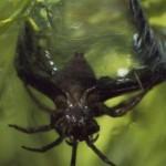 Scuba dive arachnoid